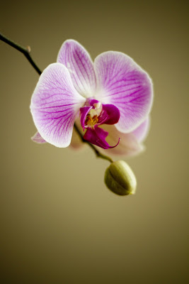 orchid 22159 1920
